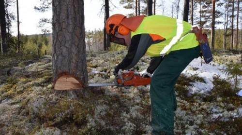 YH Skogsvårdsentreprenör